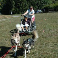 Dryland dog sled rides at Piney Run Apple Fest.