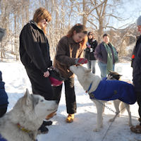 Scouts and sled dogs
