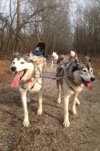 Catherine and the team of sled dogs on the Northern Central Rail Trail