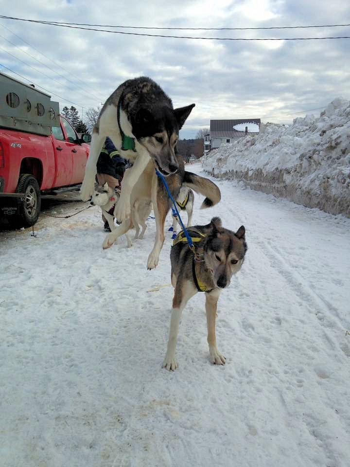 maryland sled dog adventures llc maryland dogsledding and