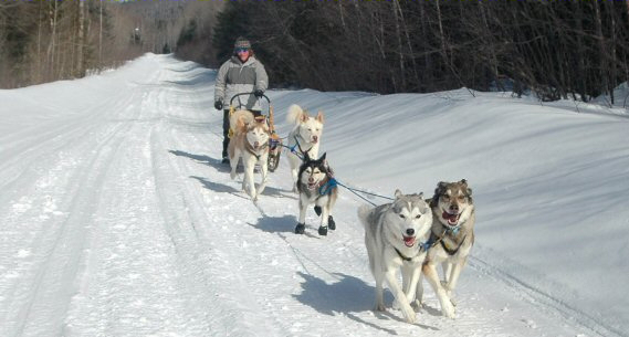 Dog sledding in Quebec with our five sled dog team.