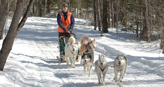 Maryland Sled Dog Adventures dog sledding team hard at work