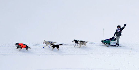 Dog sled racing on the lake in the Can-Am 30