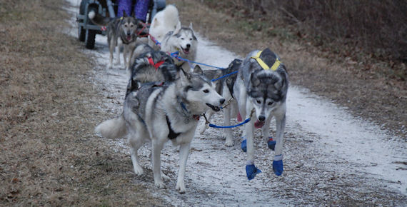 Flare and Vale lead the team down the trail