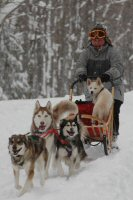 Okemo looks cute as he rides in the dog sled while training in the Winona State Forest near Sandy Creek, New York.