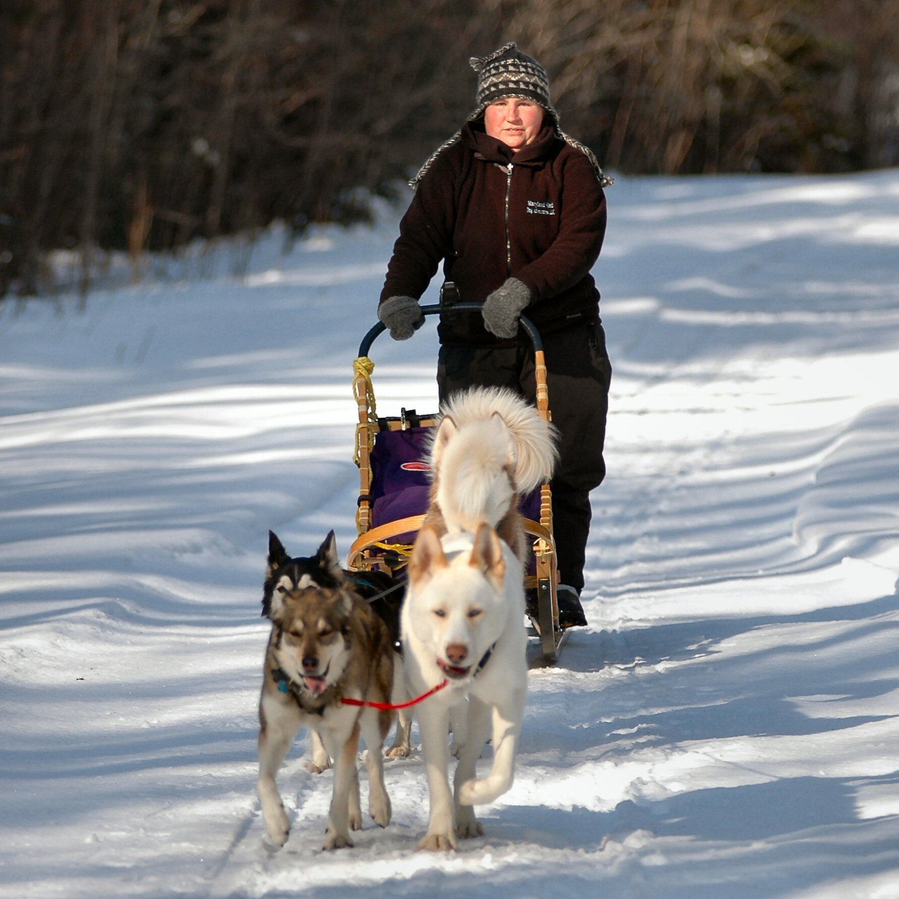 Sled dog racing in Brownville, Maine