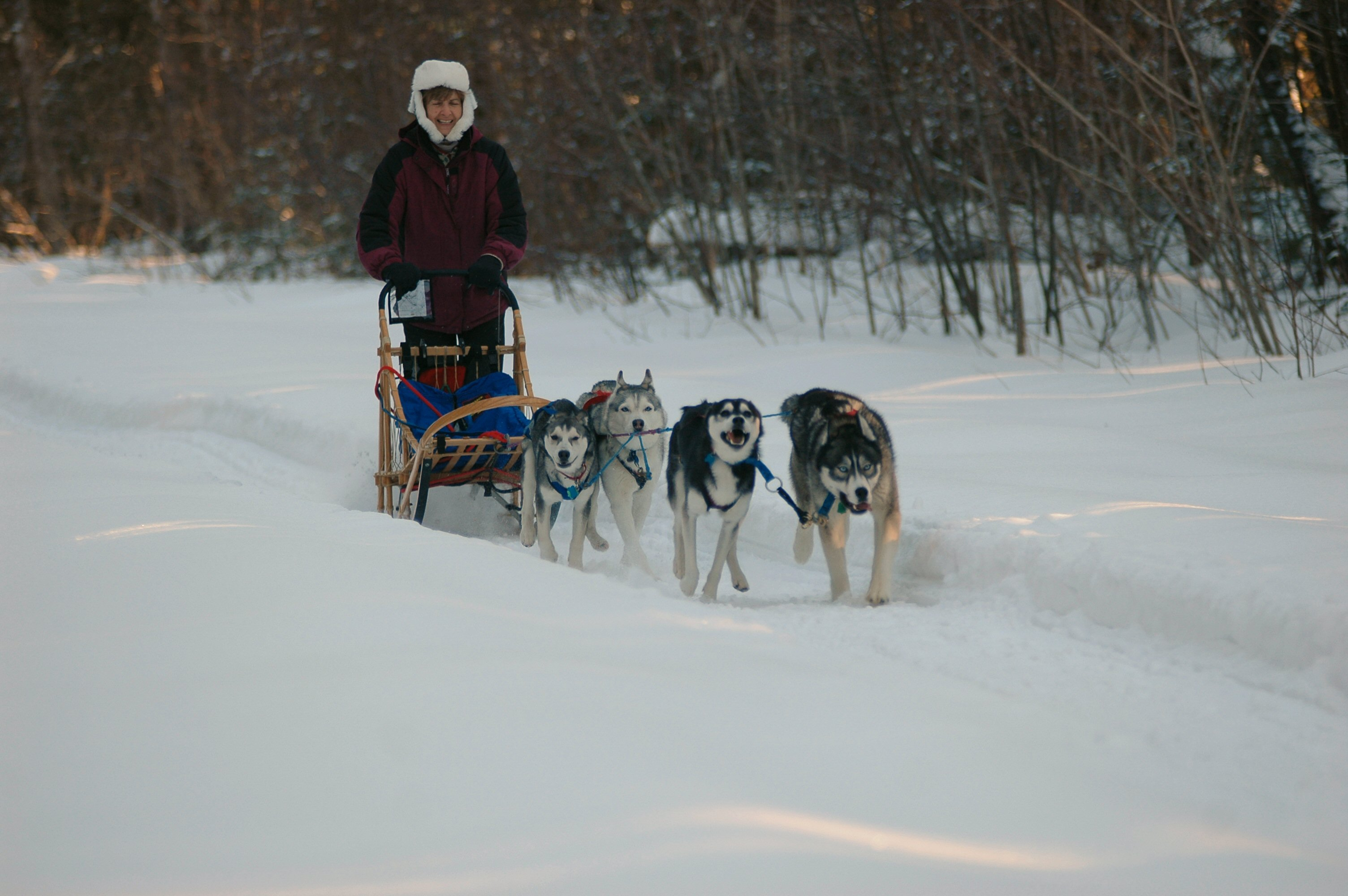 Dog Training Brunswick Maine