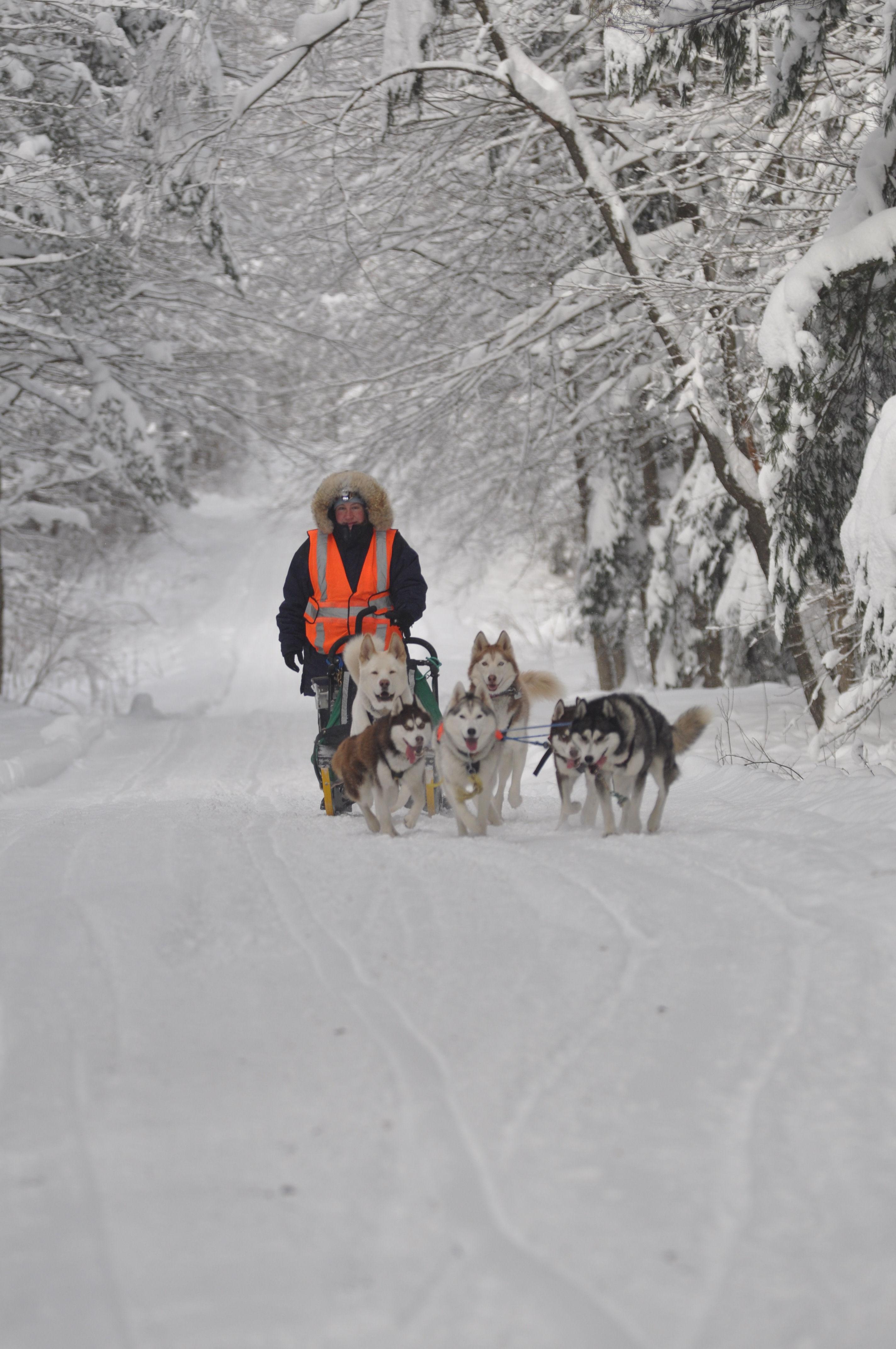Maryland Sled Dog Adventures LLC: Maryland dogsledding and ...