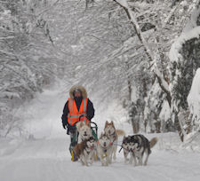 Training with the sled dog team near Pulaski, NY