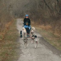 Andrea and sled dog team race down the trail